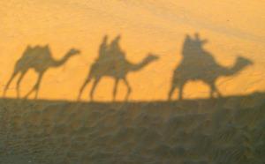 camel desert low